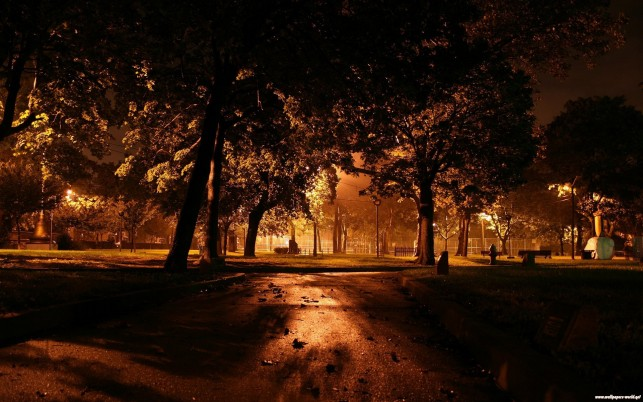 Night Park, landscapes, nature wallpapers and stock photos