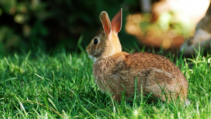 Conejo, animales wallpapers and stock photos