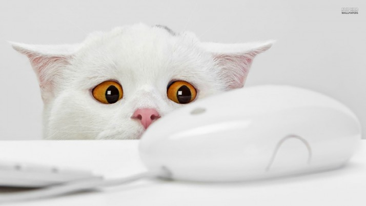 Cat yearning for the mouse, animal, animals wallpapers and stock photos