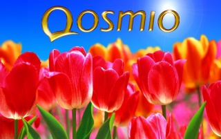 Qosmio Feeling wallpapers and stock photos