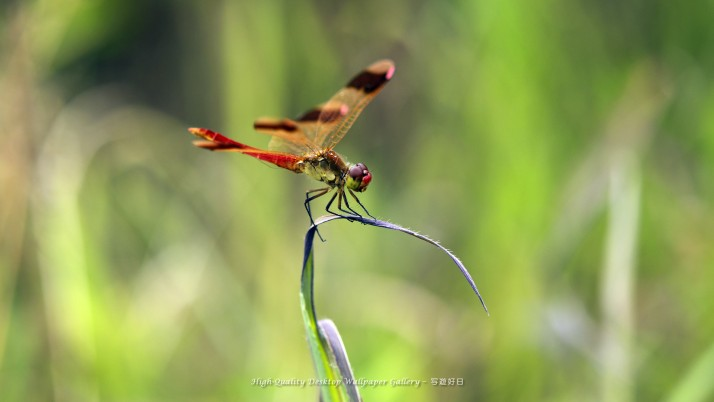Insect, dragonfly, kitchen wallpapers and stock photos