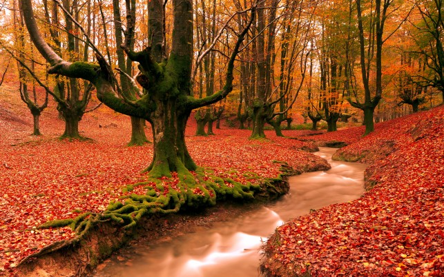 Red Forest,  autumn, nature wallpapers and stock photos
