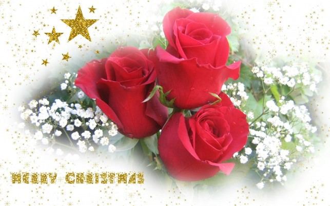 Random: Red Roses, christmas,  bouquet, tapety, merry