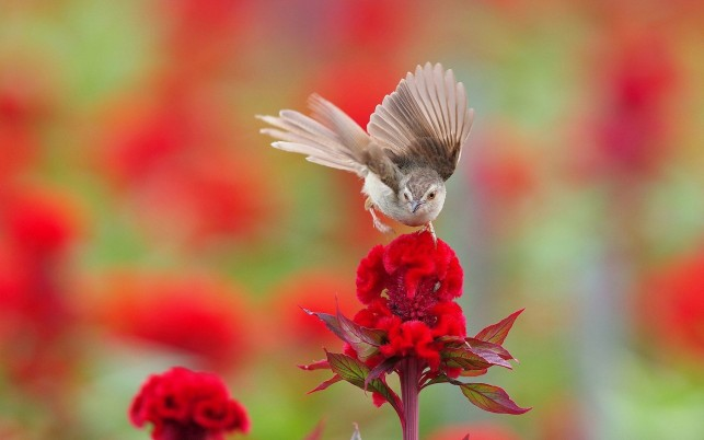 Kleiner Vogel auf der Blume, Blumen, Tier, Tiere wallpapers and stock photos