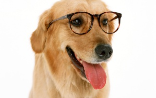 Wearing Glasses wallpapers and stock photos