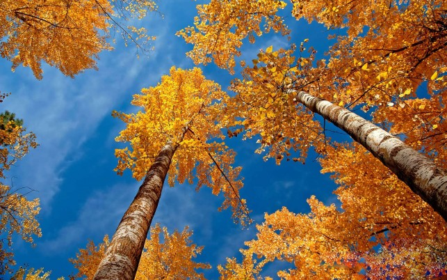 Herbst 1920 X 1080, Tier, Birke wallpapers and stock photos