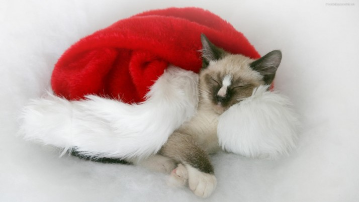 Christmas Cat, decoration wallpapers and stock photos