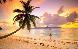 Palm Beach wallpapers and stock photos