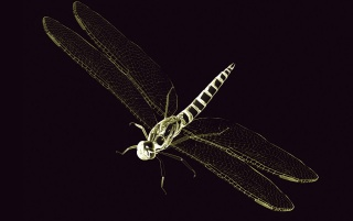 Random: Dragon Fly