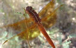 Dragonfly wallpapers and stock photos