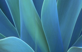 Agave wallpapers and stock photos