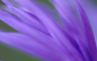 Purple Frond wallpapers and stock photos