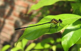 Dragon Fly wallpapers and stock photos