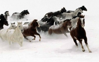 Horses wallpapers and stock photos