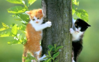 Two Cats wallpapers and stock photos