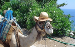 Camel Hat wallpapers and stock photos
