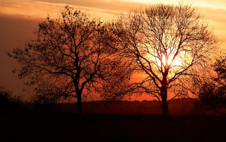 Sunset trees wallpapers and stock photos