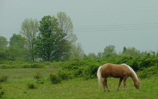 Horse Nature wallpapers and stock photos