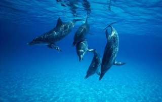 Dolphin wallpapers and stock photos