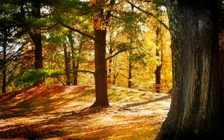 Brown Forest wallpapers and stock photos
