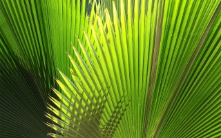Green Plant wallpapers and stock photos