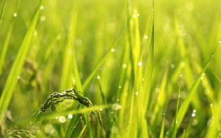 Nature Dew wallpapers and stock photos