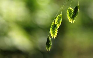 Green Branch wallpapers and stock photos