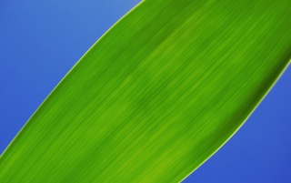 Chlorophyll wallpapers and stock photos