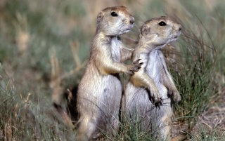 Next: Two Gorund Squirrels