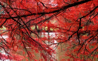 Red Curtain wallpapers and stock photos
