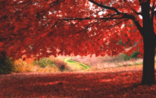 Ombre Rosse wallpapers and stock photos