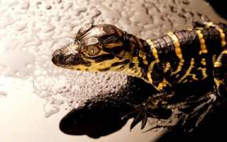 Reptile wallpapers and stock photos