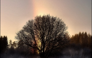 Rainbow Tree wallpapers and stock photos