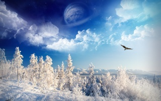 Winter Wonderland wallpapers and stock photos