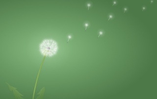 Dandelion wallpapers and stock photos