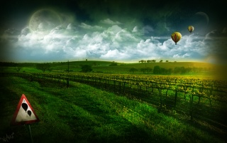 Vineyard wallpapers and stock photos