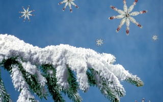 Fir Tree Arm wallpapers and stock photos