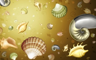 Shells wallpapers and stock photos