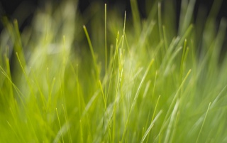 Vista grass wallpapers and stock photos