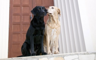 Random: Dogs Couple