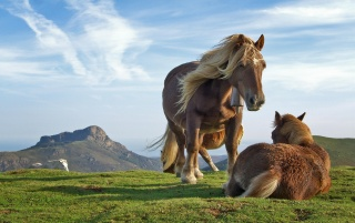 Hill Horses wallpapers and stock photos