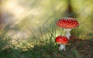 Mushrooms wallpapers and stock photos