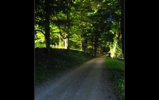 Road in forest wallpapers and stock photos