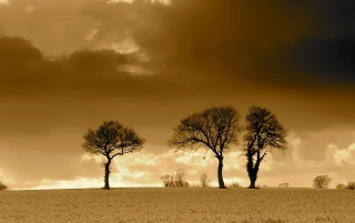 Three Trees Horizon wallpapers and stock photos