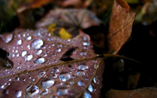 Random: Waterdrops on leaf