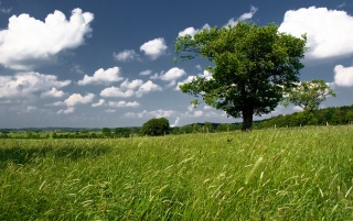 Landscape Tree wallpapers and stock photos
