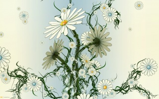 Daisy Camomile wallpapers and stock photos