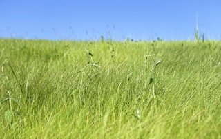 Fresh Grassland wallpapers and stock photos