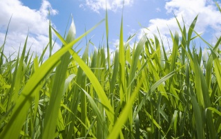 Grass and Sky wallpapers and stock photos