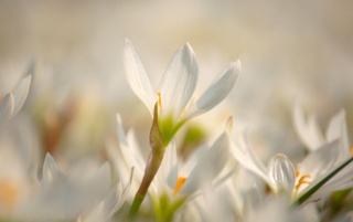 Spring Flower Bloom wallpapers and stock photos